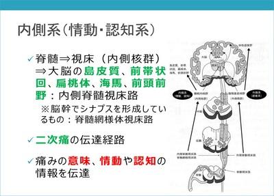 疼痛の基本1-2.jpg