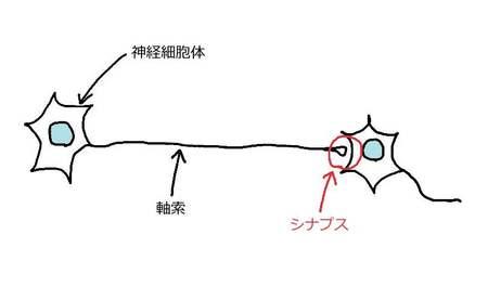 シナプス.jpg