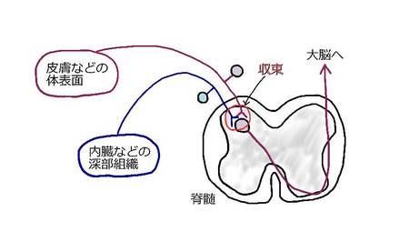 収束投射説.jpg