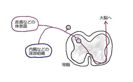 同一ニューロン説.jpg