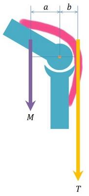 曲がった関節とてこの原理.jpg