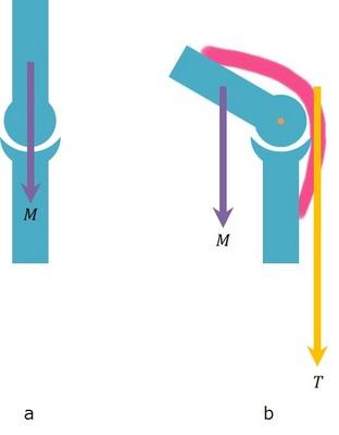 直立と曲がった関節の比較.jpg