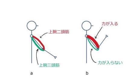 相反神経支配.JPG