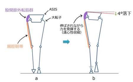 股関節衝撃吸収筋肉.jpg