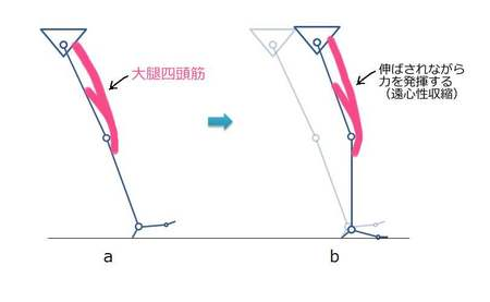 膝関節衝撃吸収筋肉.jpg