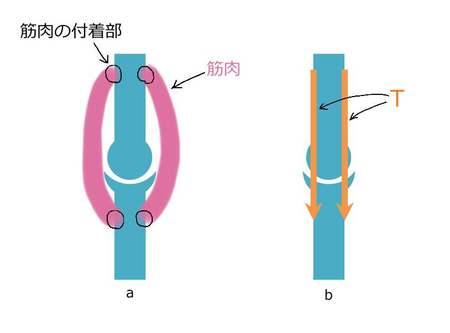 関節と筋肉の荷重.JPG