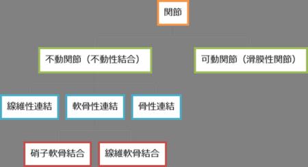 関節の分類.png
