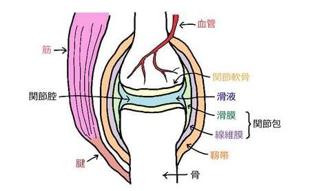 関節の構造.jpg