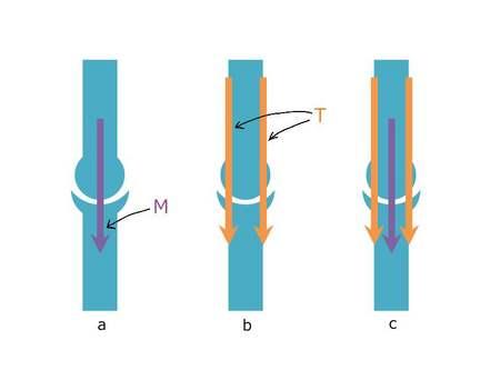 関節への骨と筋肉の荷重.JPG