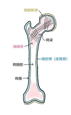 骨の構造.jpg